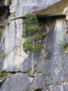 La Vision de Bardane : des territoires résilients qui respectent les hommes et la nature et peuvent faire face aux crises