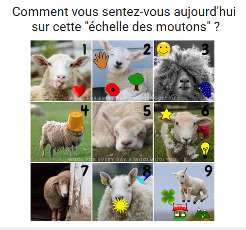 Pepiniere_Meteo Moutons